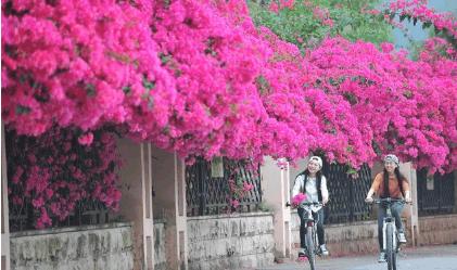 """邻居家养3种""""爬墙""""花卉, 种1棵开成""""花海"""""""