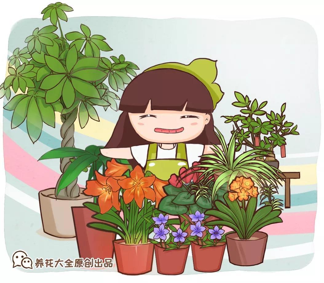 生活不如意的时候, 试着养盆花草, 找到其中乐