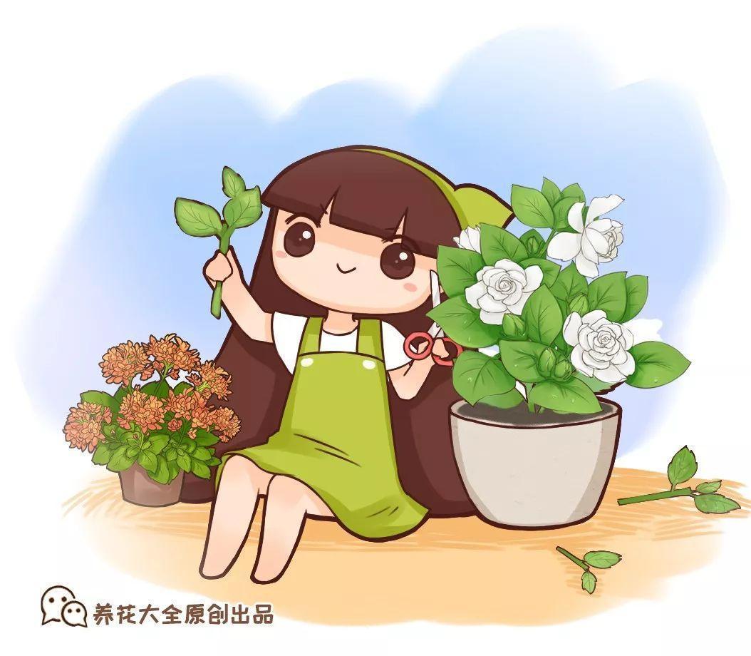 长寿长叶不开花? 动手剪两刀, 花开一茬接一茬