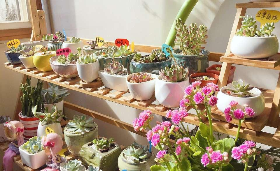 """这4种花是""""繁殖机器"""", 1年能变100盆, 关键: 开花多、还漂亮"""