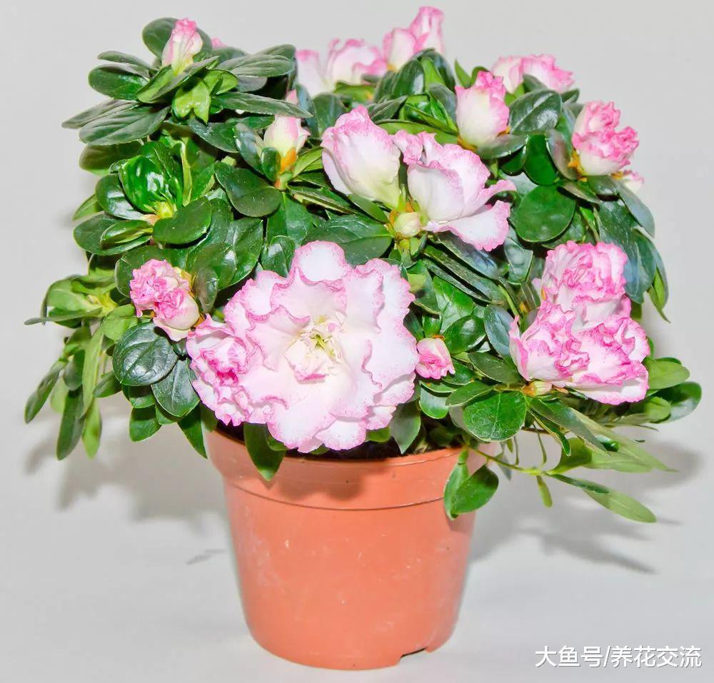 这10种盆栽植物特别适合种在家里, 能够舒缓压力、净化空气