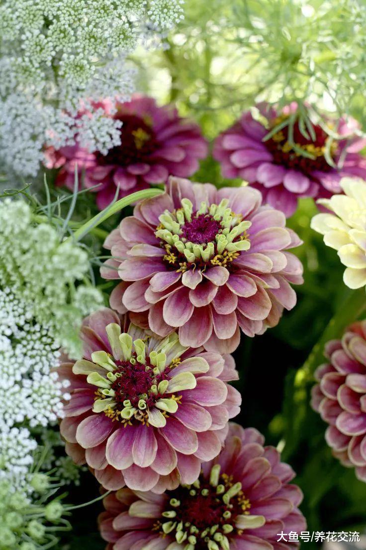 适合新手养护的10种草本开花植物, 不用怎么照顾就能花开灿烂