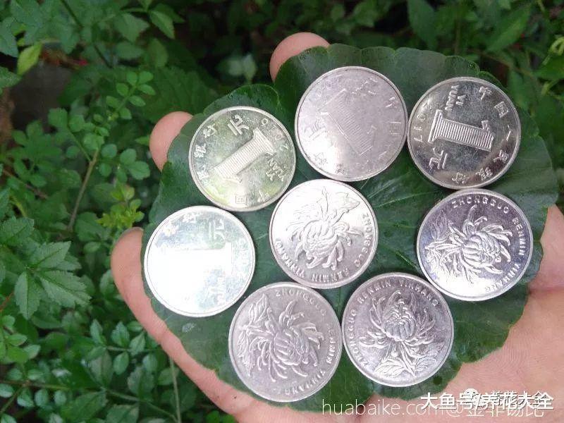 铜钱草水里加点这个, 不但长满盆, 叶子又大又绿!
