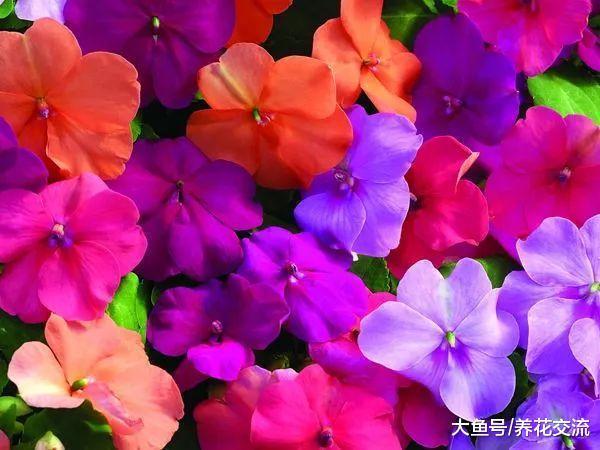 在家里养花最常遇到的几种病害, 哪一种是你最讨厌的