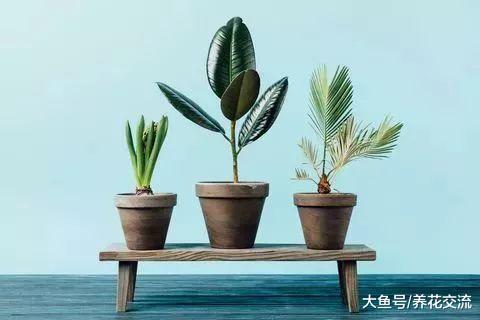 养不活多肉植物的园艺新手, 你可以养这些这些室内植物