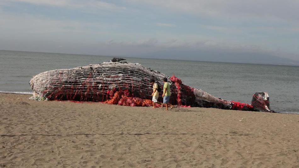 海边出现一头搁浅的鲸鱼,所有走近的人都为之深思,什么原因?