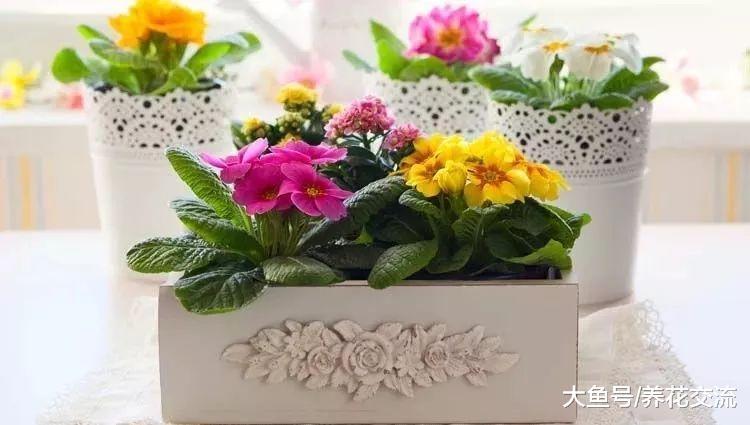 开花类的盆栽植物养在室内需要注意的8个技巧