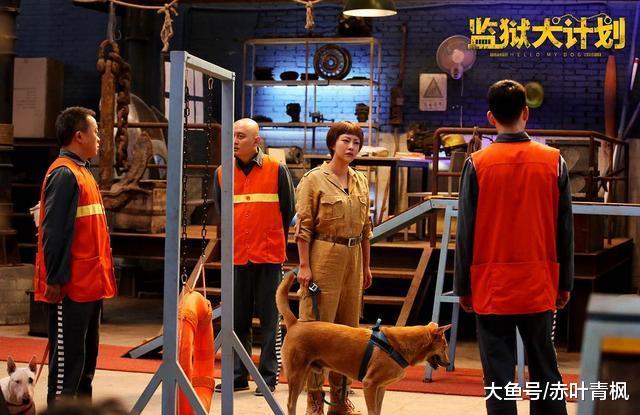 国内首部聚焦在监狱服刑人员和流浪狗的电影, 狗狗超萌超有爱!