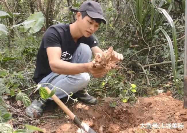 小伙大山中挖到的野味, 据说可以卖到几十元一斤, 是啥宝贝呢?