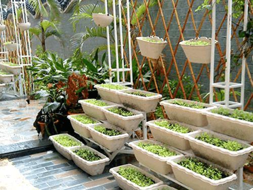 """爱在阳台种""""小葱"""", 这招用上, 半个月就收一茬, 吃不停!"""