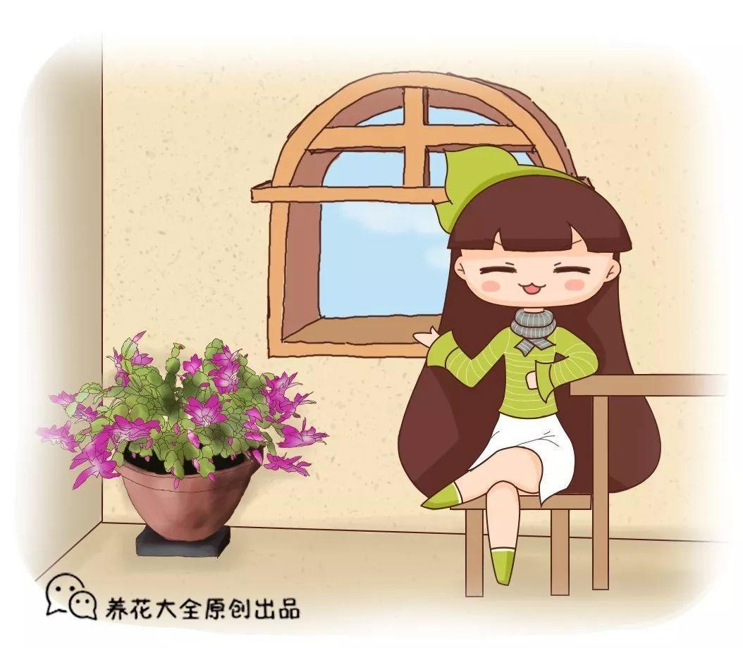蟹爪兰盆里埋点它, 叶子肥厚油亮, 花苞止不住的冒!