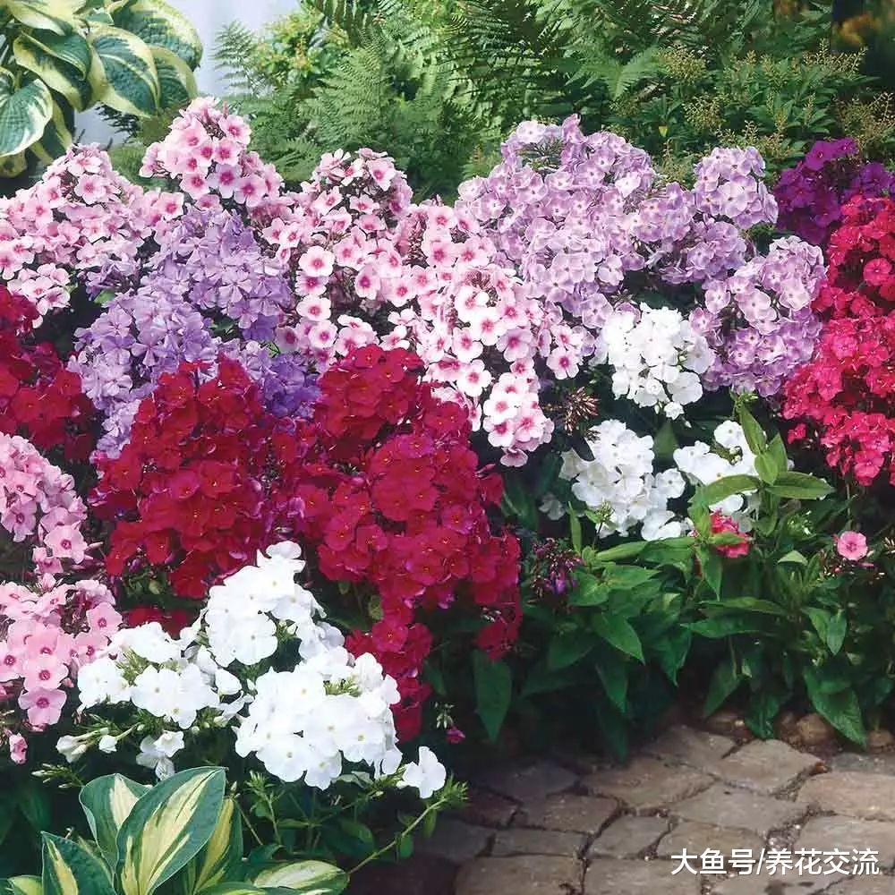 这些花卉不用每一年都重新栽种, 8种可以多年开花的植物