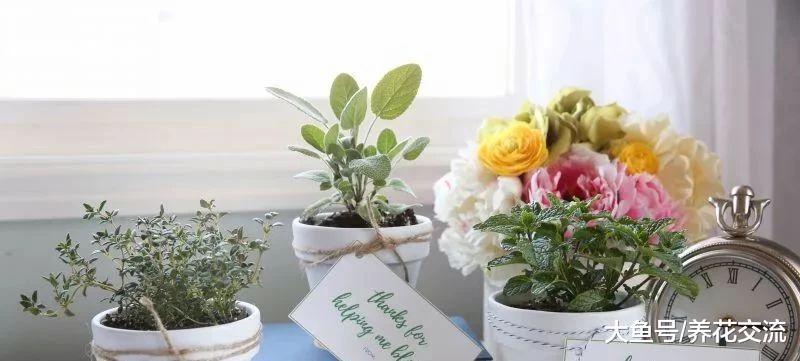 盆栽植物作为礼品的创意, 你更喜欢用哪些花卉作为礼物?