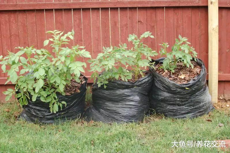 废弃的塑料袋不要扔了, 用来养花还有10个实用的好处