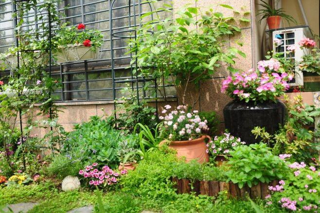 """高手养花""""有秘诀"""", 浇水加点""""它"""", 土壤肥沃疏松, 啥花都旺"""