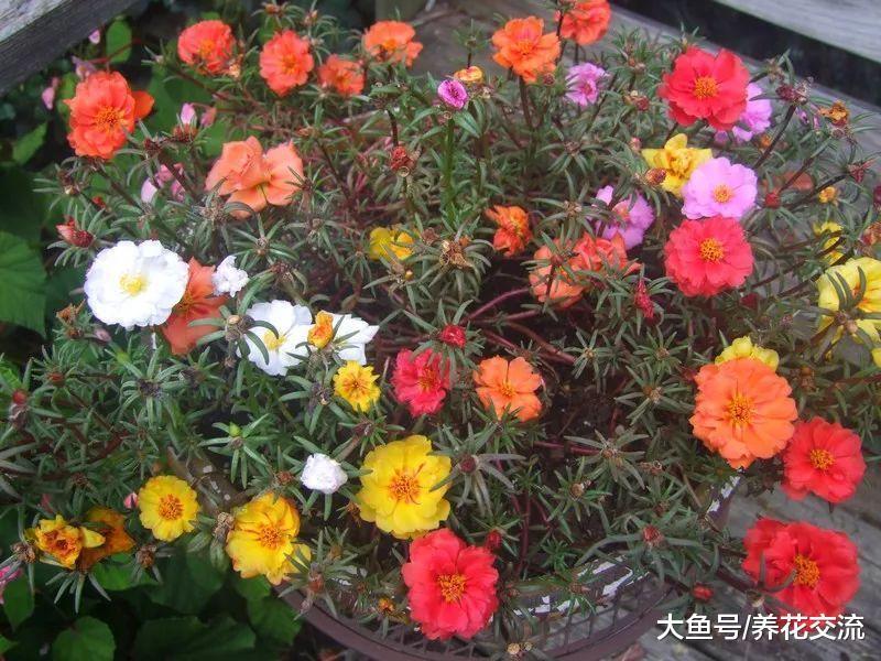 8种养在院子里全年都不用浇水的耐旱植物, 花朵还开得这么艳丽