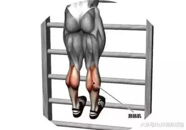 为什么您肌肉很年夜, 身段反而越练越丢脸?