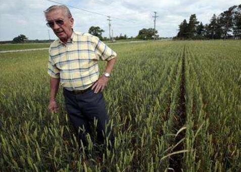 """中国将35万吨小麦订单""""移花接木""""——美国农民哭了!"""