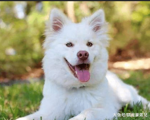 离家三年,回家时狗狗的举动很意外,谁知后面的事更加让人意外!