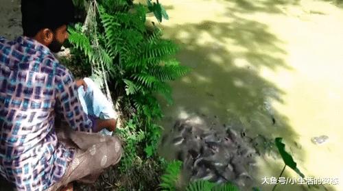 打窝照样喂鱼? 一群塘鲺皆到岸边去了, 网友: 欠好吃