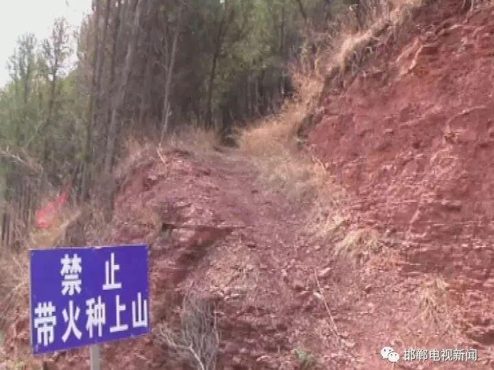 涉县护林员赵有平:守护起一片绿水青山