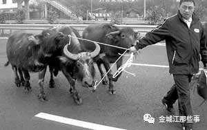 河池环江那名偷牛贼,逃窜11年,末于竣事了!