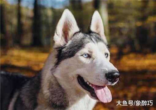 最爱咬人的5种狗狗,前三种爱咬仆人,后两种爱咬路人,要当心了