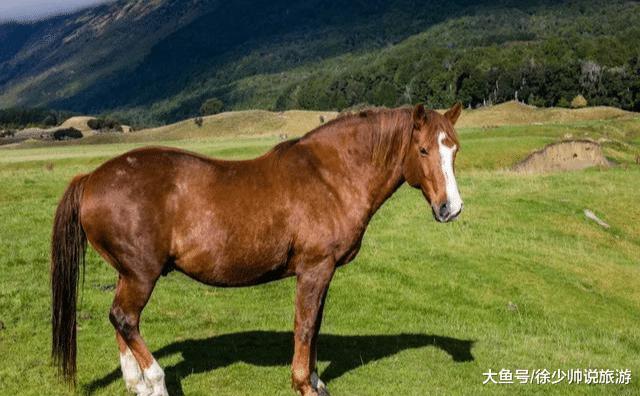 不能不往新西兰的32个理由,哪一个戳中了您?
