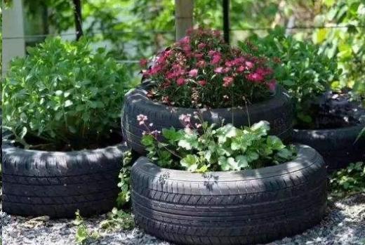 冬季克己花肥好机会, 洒盆里, 花花一个月便爆盆!