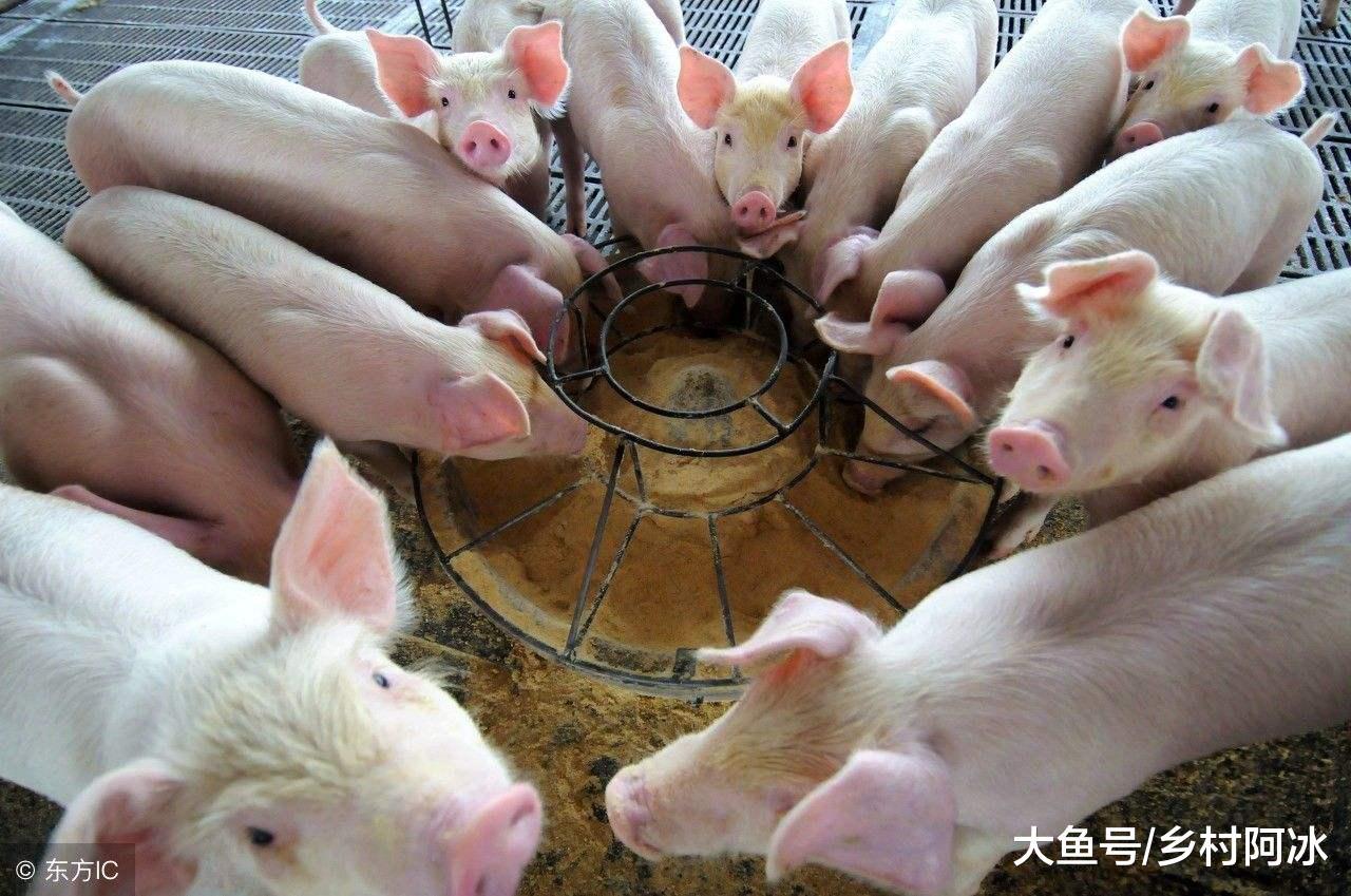 11月7日猪价下跌省份减少,整体猪价趋稳,短期内猪价涨跌两难