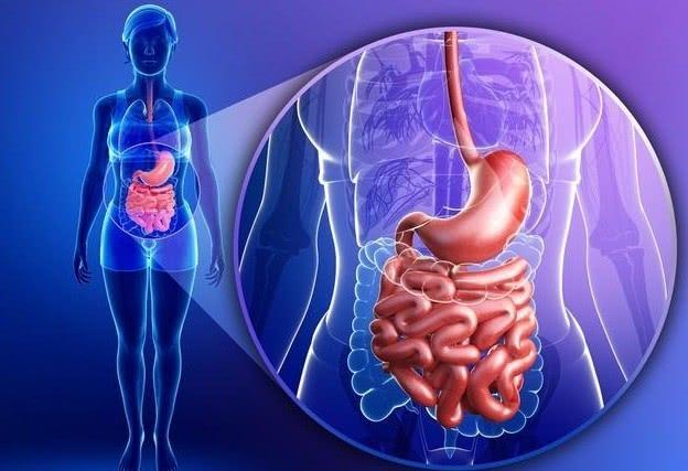 """肠道健康: 只有""""肠寿""""才能长寿, 改善肠道先了解这些""""肠识"""""""