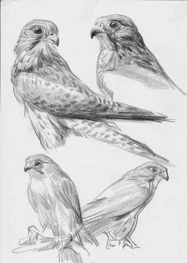 素材-一些动物速写的临摹范本图片