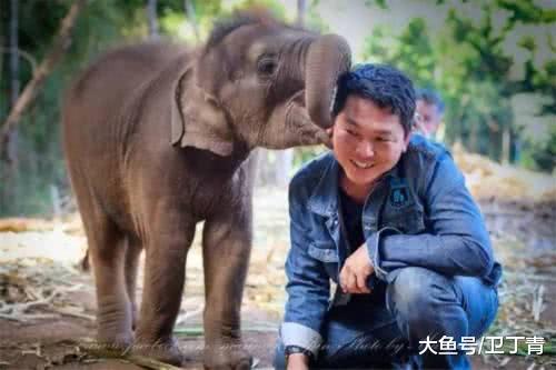 """泰国有一个小""""地痞""""象,睹到女死便""""上"""",还要""""啵啵"""",游客们皆大叫好玩"""