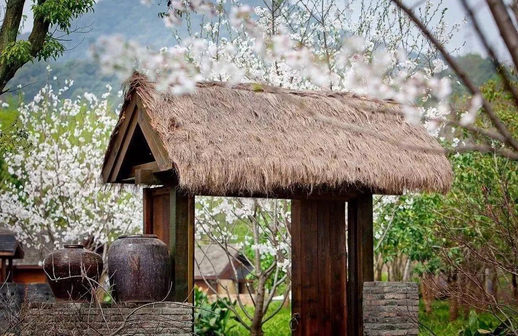 我想有个小院, 满院花香, 过宁静的生活!