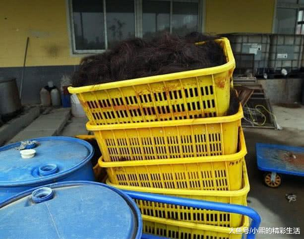 世界最大头发加工厂,我们被剪掉的头发是怎么处理的?