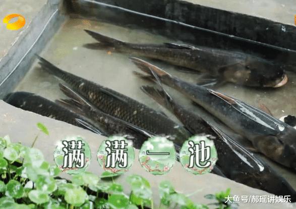 节目中8位嘉宾为何只有6条鱼,在鱼做好端上来的时候,暴露了综艺节目的本质!