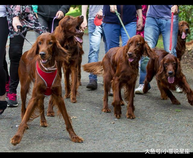 狗妈一胎死15只小狗差面破记载, 一年后再相散的排场令人动容!