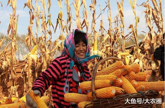 农人同伙, 别再喊进步粮价了! 只要进步那个, 粮食免费供给皆止
