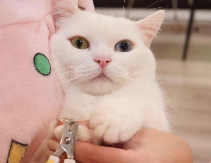 猫咪必然要剪指甲吗?若是它不喜欢,是不是能够不剪