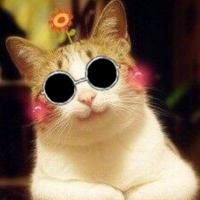 猫生的动漫日常