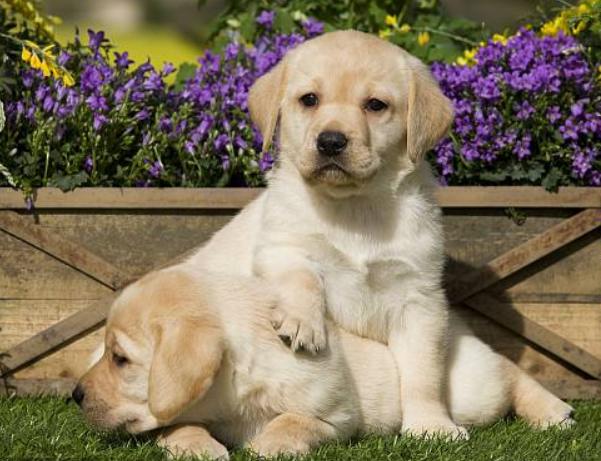 5种很不听话的狗狗,哈士偶胜利上榜,发起新脚铲屎官不要养
