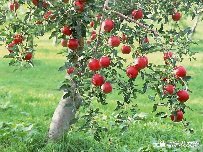 适合在家院子里栽种的几种果树, 一定会有你喜欢的品种