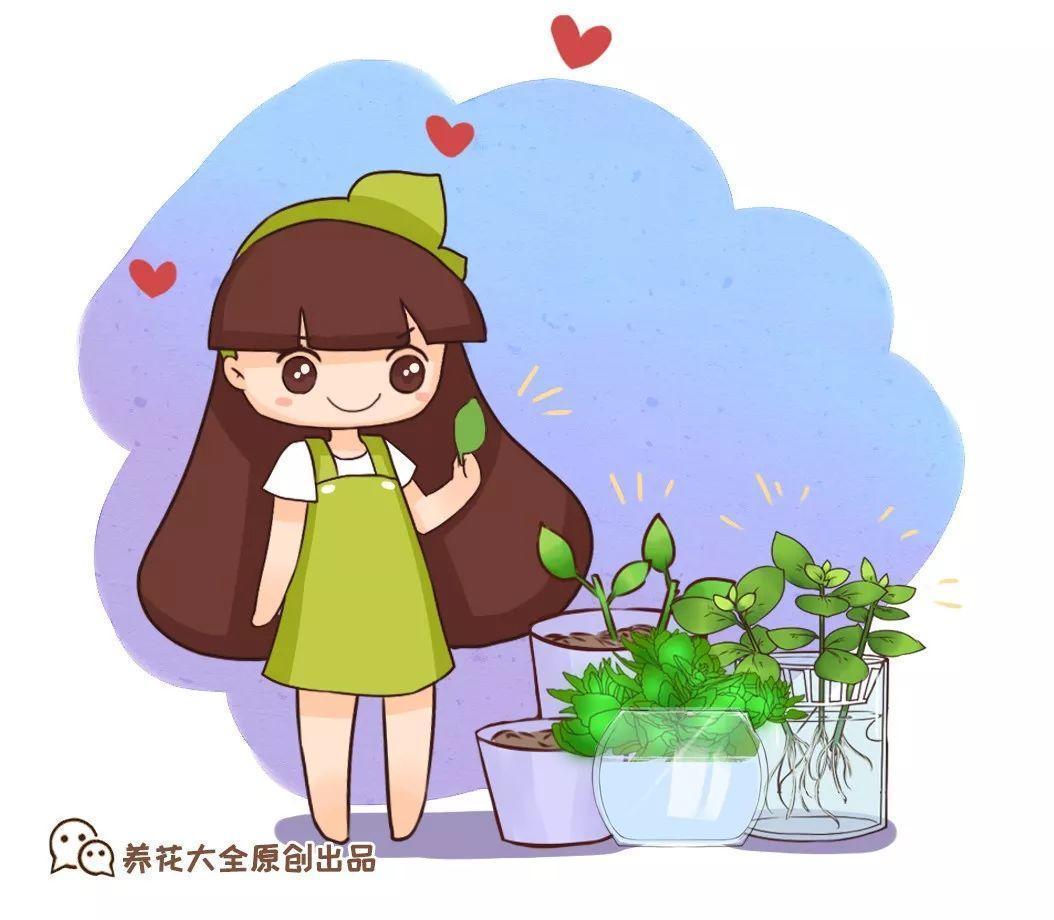 这5种花别再买, 撸片叶子扔盆里, 遇土就生根!