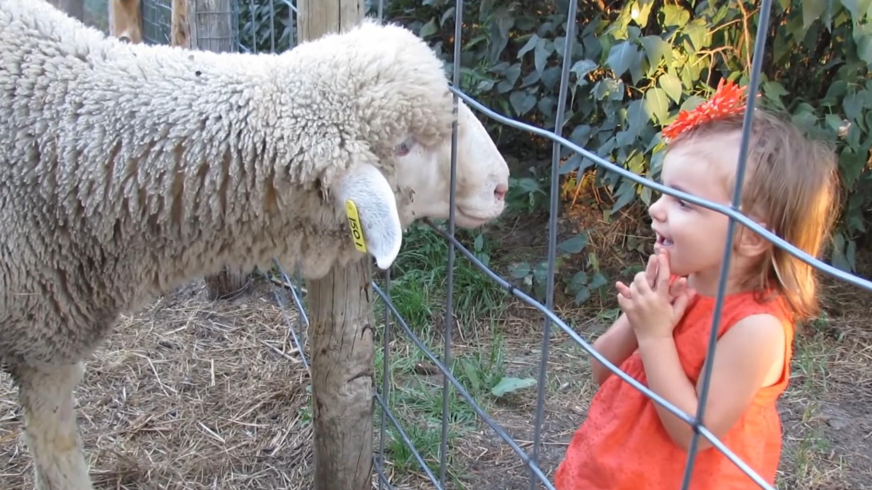 """萌娃能听懂山羊说话?山羊一""""开口"""",吓得小女孩直接摔倒了"""