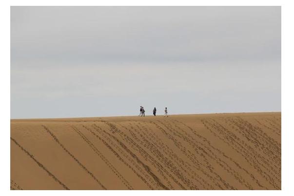 """稀奇日本""""国宝级沙漠""""快要变绿洲当地动员人力为沙漠拔草!"""