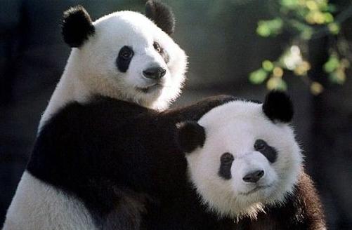 外国友人回国时最想带中国的什么回去?这个答案中国人都不敢想!