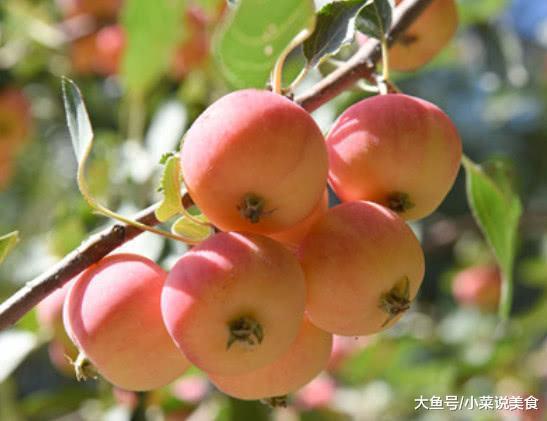 去黑龙江必吃的火果, 味好苦涩, 其余处所还吃不到