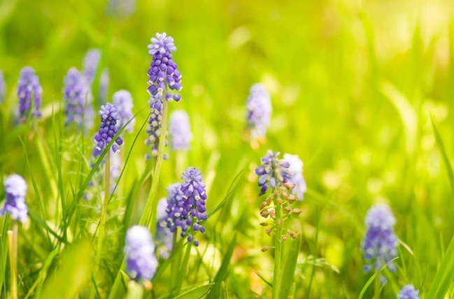 白癜风患者春季如何远离复发?