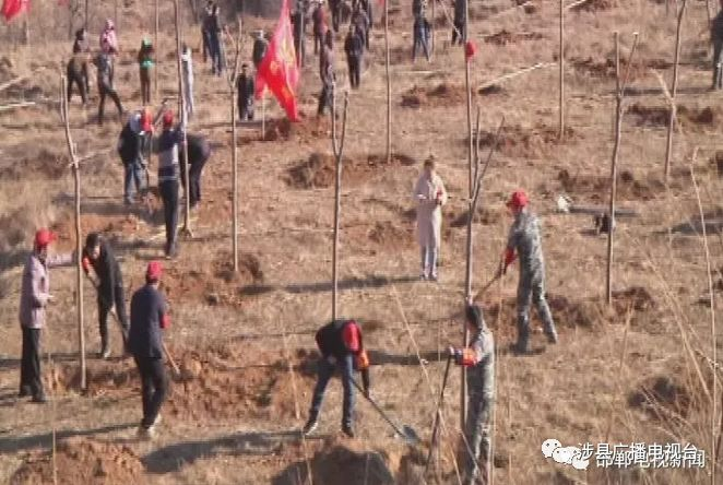 在第41个植树节,涉县掀起春季植树造林高潮