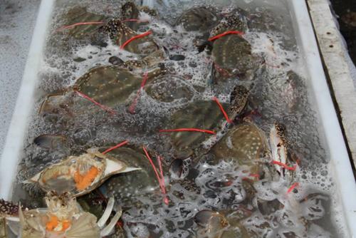 金秋十月不是吃螃蟹的黄金期, 现在才是, 摊主: 确定不是同行吗